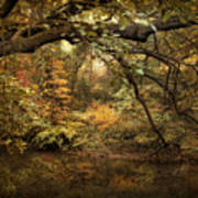 A Glimpse Of Autumn Art Print