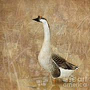 A Goose Is A Goose Art Print by Betty LaRue