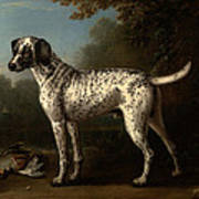 A Grey Spotted Hound Art Print