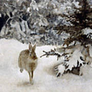 A Hare In The Snow Art Print