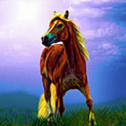 A Horse Called Sheba Art Print