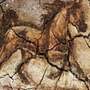 A Horse - Cave Art Art Print