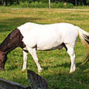 A Horse Named Dipstick Art Print
