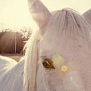 A Horse's Eyes Art Print