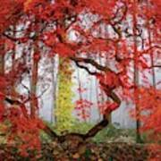 A Japanese Maple Tree Art Print