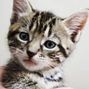 A Kittens Helping Hand Art Print