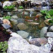 A Koi Pond For Outdoor Garden Art Print
