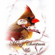 A Lady For Christmas - Cardinal Card Art Print