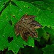 A Leaf Upon A Leaf Art Print
