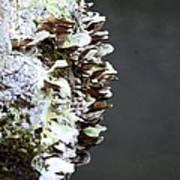 A Lichen Abstract 2013 Art Print