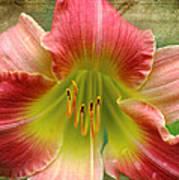 A Lily A Day Art Print