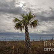 A Lonely Palm Tree Art Print