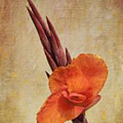 A Loving Gladiolus Art Print