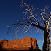 A Mesquite Trees And Buttes Art Print