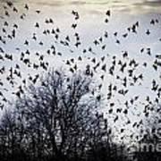 A Million Birds Art Print