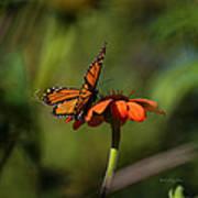 A Monarch Butterfly 4 Art Print