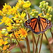 A Monarch Butterfly Art Print