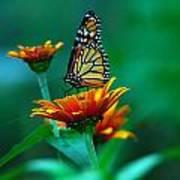 A Monarch Art Print