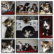 A Montage Of Kittens Art Print