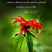 A Mountain Flower  John 3 16 Art Print