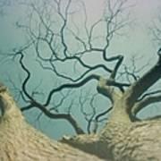 A Naked Tree Art Print