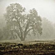 A Old Oak On A Foggy Day  Art Print