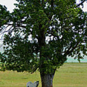 A One Horse Tree And Its Horse Art Print