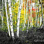 A Painting Autumn Birch Grove Art Print