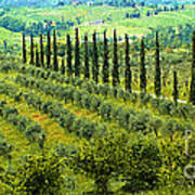 A Painting Tuscan Panoramic 4 Art Print