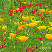 A Painting Tuscan Poppies Art Print