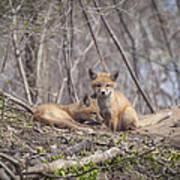 A Pair Of Cute Kit Foxes 2 Art Print