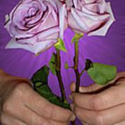 A Pair Of Purple Roses Art Print