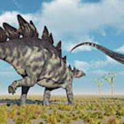 A Pair Of Stegosaurus Dinosaurs Art Print
