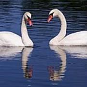 A Pair Of Swans Art Print