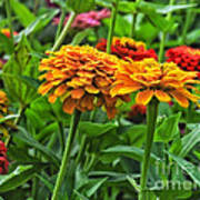 A Pair Of Yellow Zinnias 03 Art Print