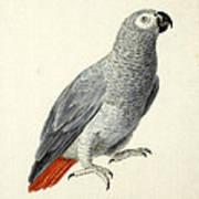 A Parrot Art Print