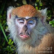 A Patas Baby Monkey Behaving Badly Art Print