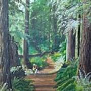 A Peaceful Walk In The Redwoods Art Print