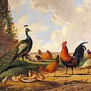 A Peacock And Chickens In A Landscape  Art Print