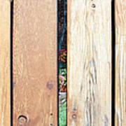A Peek Through Wood Art Print