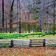 A Place Of Peace Among The Daffodils Art Print