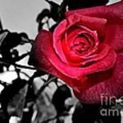A Pop Of Red - Rose  Art Print