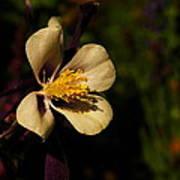 A Pretty Flower In The Sun Art Print