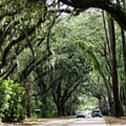 A Pretty Tree Covered Road Somewhere On Hilton Head Island Art Print