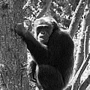 A Primate Art Print