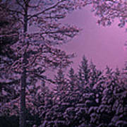 A Quiet Snowy Night Art Print