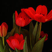 A Red Tulip Day Art Print