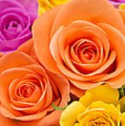 A Riot Of Roses Art Print