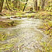 A River Of Green Art Print