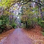 A Road In Autumn. Art Print